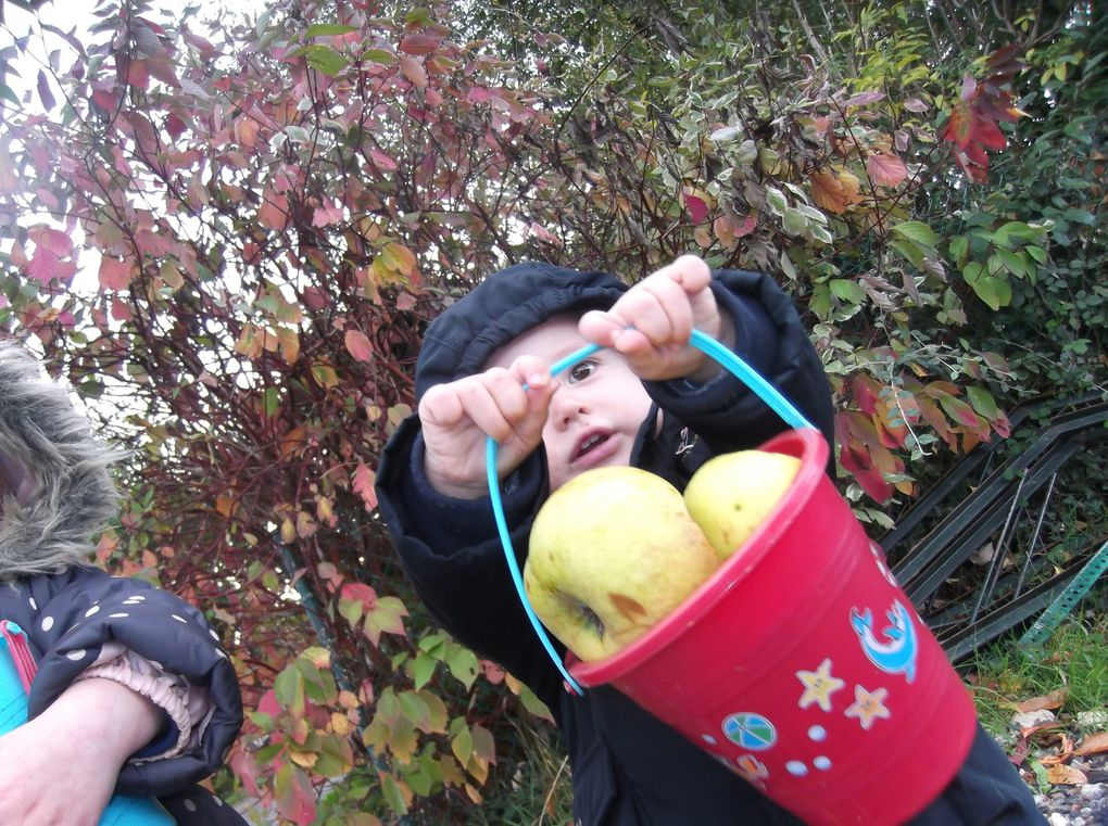 Cueillette abondante, pommes, pommes, pommes !!!