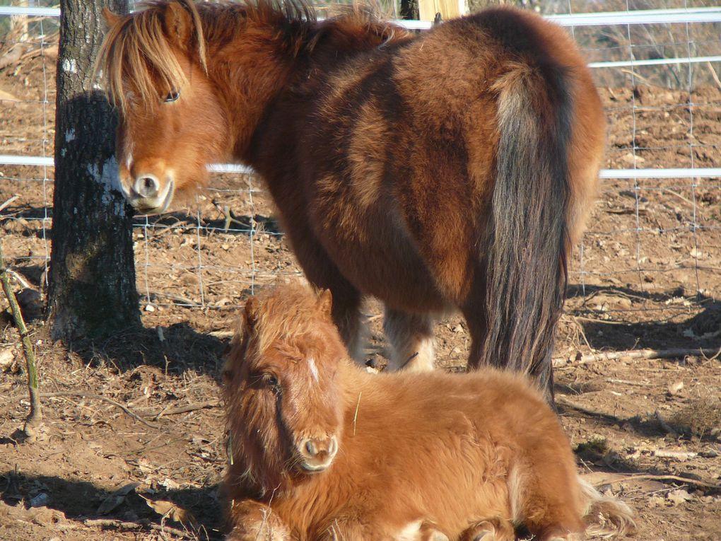 Adorables poneys