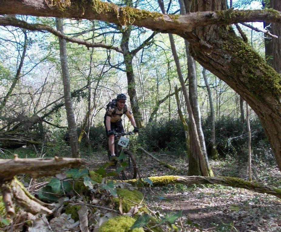La Saint Maxime des arbres chez les romains des bois