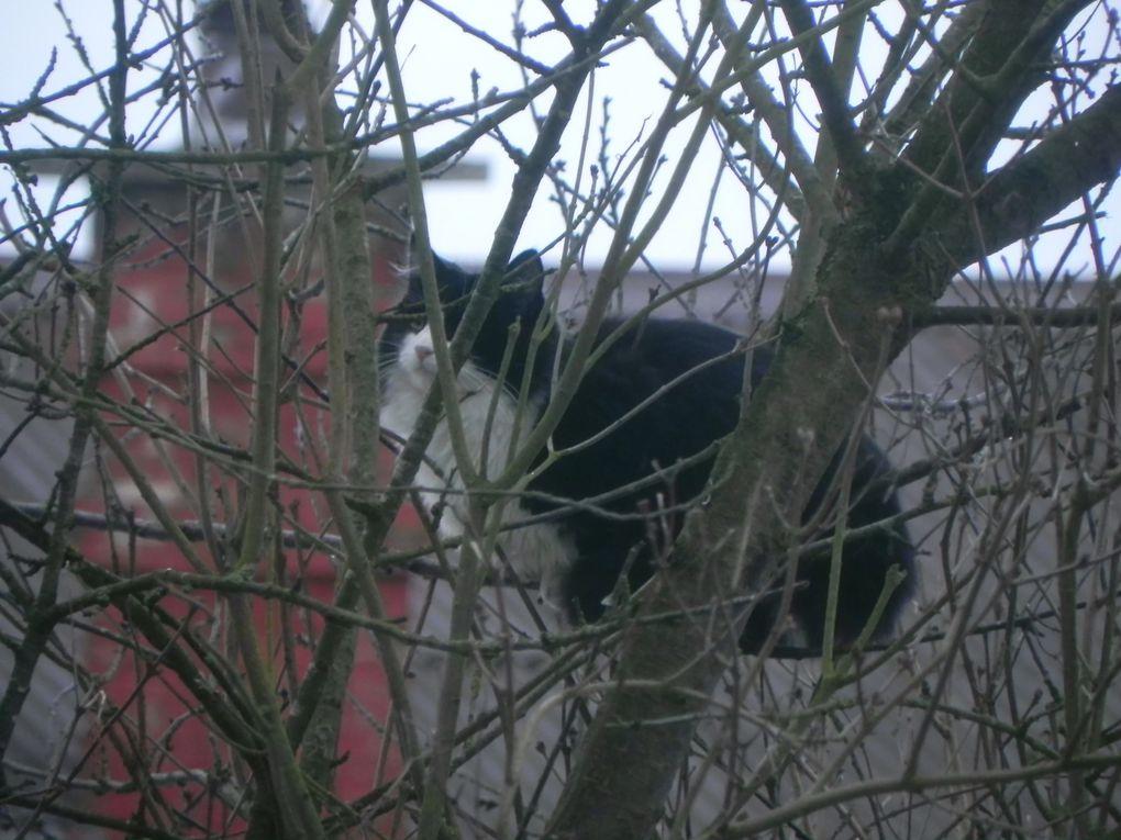 Les arbres sont dénudés. Les oiseaux ont froid et faim ce qui arrange bien monsieur le chat qui peut guetter plus facilement ses proies.