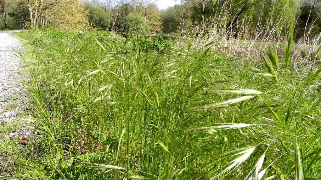 Puis, les herbes folles, la fleur de pissenlit visitée, les jolies pâquerettes, un  oeillet sauvage et un arum encore plus sauvage puisqu'il essaie de se cacher.