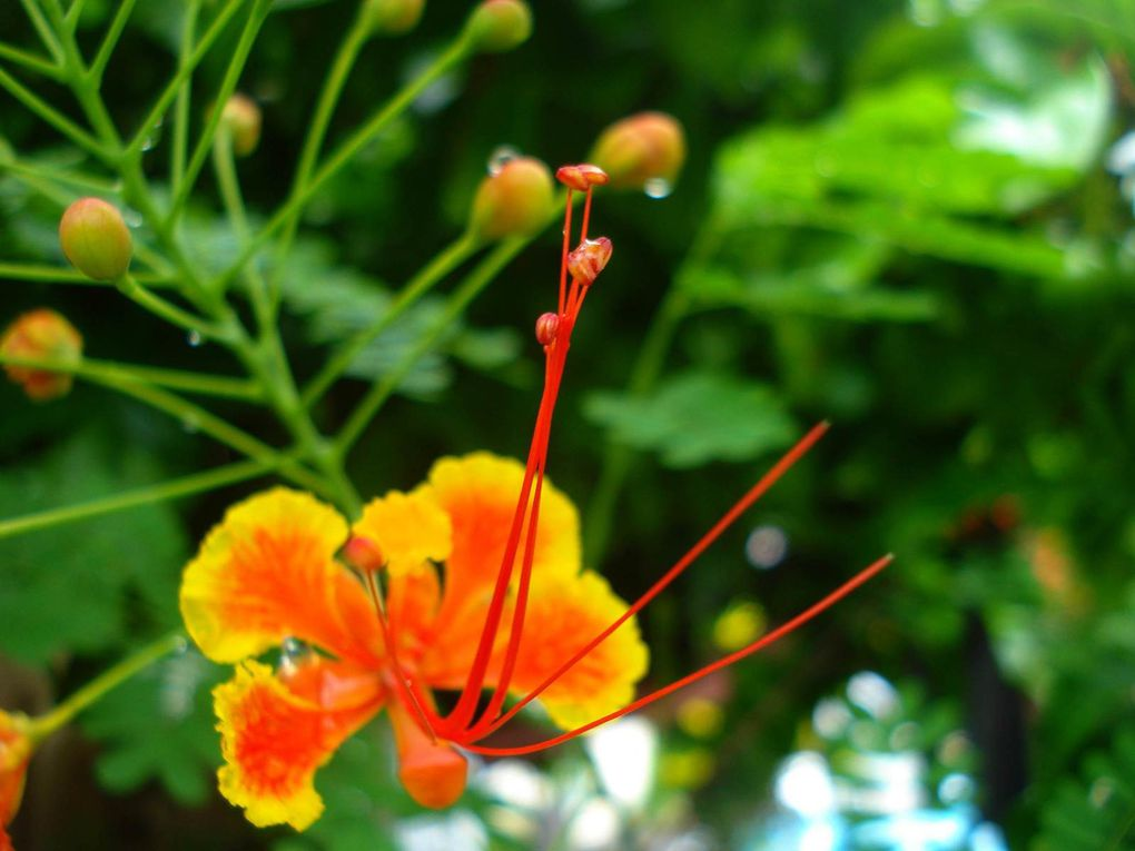 Acacias... Automatic slideshow... (4 views)