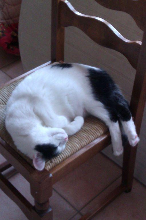 Ah c'est cool, la vie ! Surtout la sieste... sur les cuisses bien dodues de Mamie ^^
