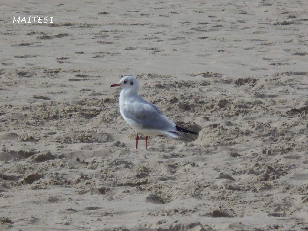 Sur la dernière photo, regardez-bien, on voit les phoques sur le sable !!! Je n'ai pas pu aller plus près car le chemin était en pavés ultra glissants ^^