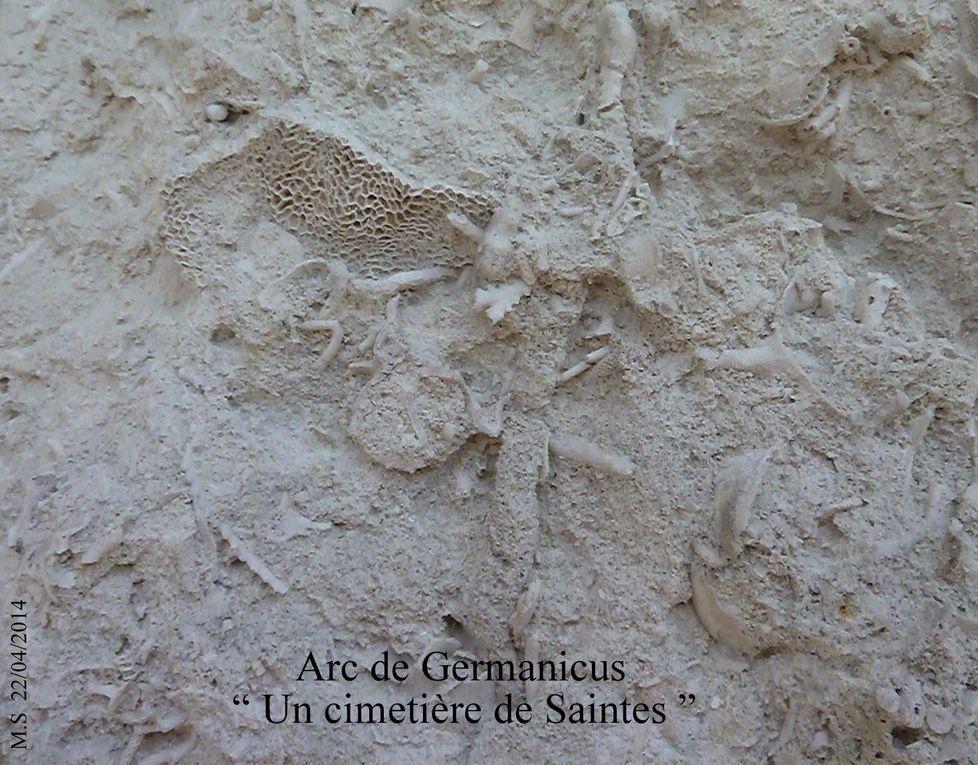 Animaux fossiles qui remontent concrètement à notre mémoire.. enfouie. Unique graffiti très ancien découvert sur un des pieds de l'arc Saintais. A suivre pour le voir de plus près, même s'il ne reflète pas un caractère hautement historique, comme il est le seul découvert à ce jour, cela vaut la peine de s'y arrêter. A suivre.....