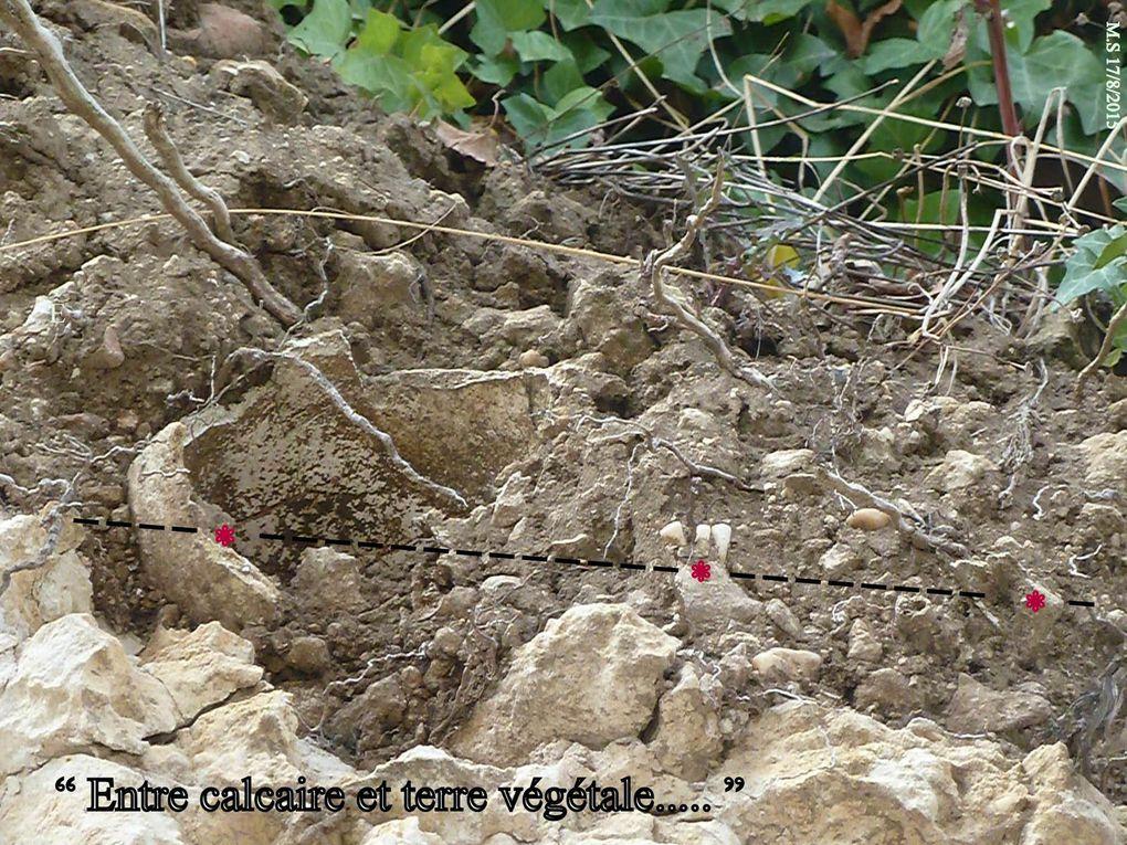 """La poule aime bien faire son """" nid de poule.. est-ce pour se cacher ou bien en brassant la terre à toute volée... elle a trouvé un bon moyen de combattre les poux. Ces ossements sont le passé de son """" porteur  """", mais déjà la nature enfonce ce passé dans notre passé. Dans cette portion de terre entre le végétal et la roche calcaire."""