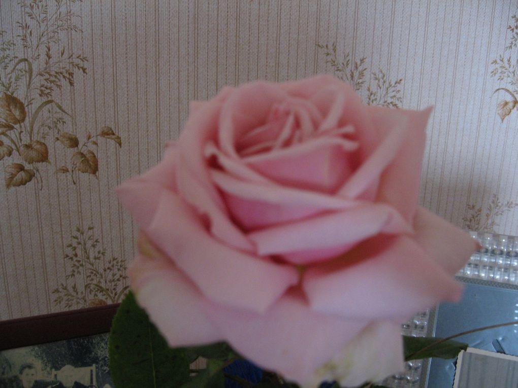 """PS: La rose a une histoire, elle a été photographiée dans une chambre d'une maison de retraite, mais pourquoi...? Certes son parfum sublime y fut pour quelque chose... mais il a fallu la pister dans cette """" Maison de vie """". et du royaume des fleurs sautons à un autre...celui d'une future Miss.... qui sera élue en présence de Geneviève de Fontenay."""