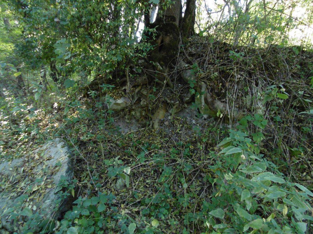 """Après cette terrible tempête qui avait traversé la Charente-maritime,des milliers d'arbres détruits, renversés... la vie a repris le dessus. Ainsi cet arbre, peuplier, s'était couché sur le sol et 17 ans plus tard on le retouve toujours couché mais avec ses branches qui sont devenus, à leur tour, arbres et racines, en fonction de leur position sur le tronc martyrisé par le vent. On reste """" pantois """" devant ces prodiges de la nature... """" La vie après la vie ou rien ne se perd tout se transforme """"."""