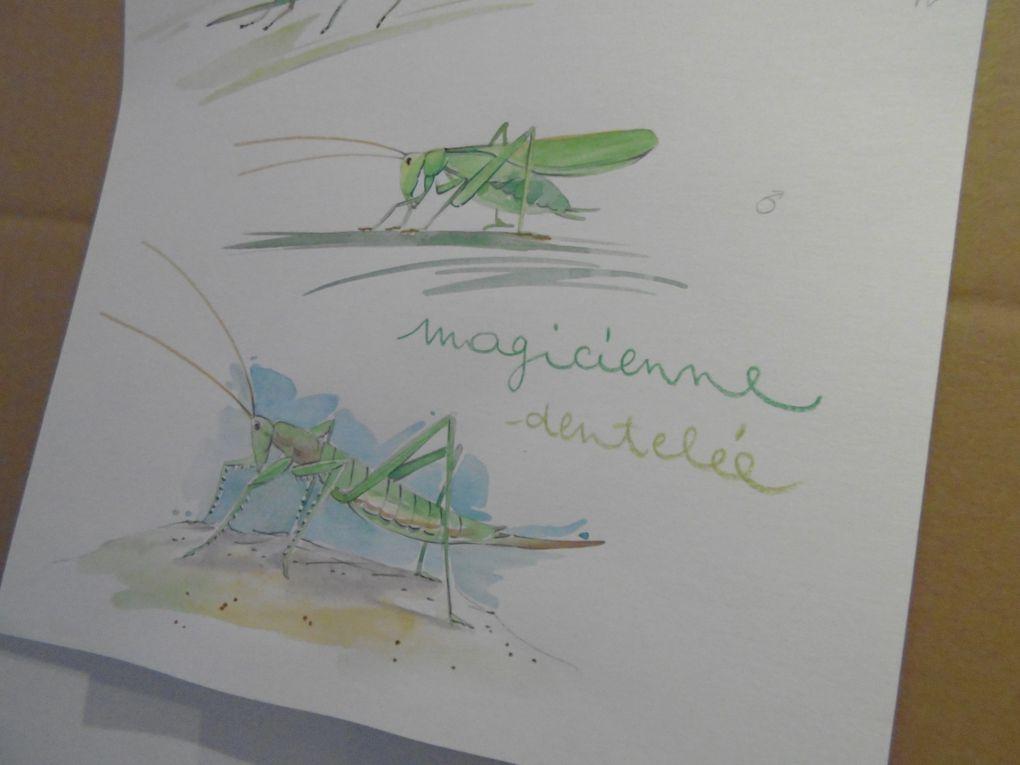 """Son atelier où elle apprend aux autres à maîtriser cet art qui lui va si bien, elle accueille les élèves depuis la tendre enfance à l'âge adulte, mais essentiellement ses tranches d'âge sont de 0 à 3 ans (peinture et dessin) puis de 4 ans à 14 ans (environ) pour un travail plus affiné. Sur sa table d'exposition des titres... """" Les petites bêtes """" (10/2016), """" Les arbres """" (10/2016), """" Papillons de A à Z (10/2014), """" Mon grand livre de la nature """" (11/2016). Bien sûr c'est aussi la séance dédicaces......."""