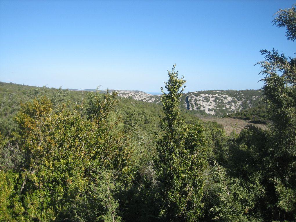 Les hauteurs de Fontjoncouse avec, au loin,  le mont Saint-Victor.