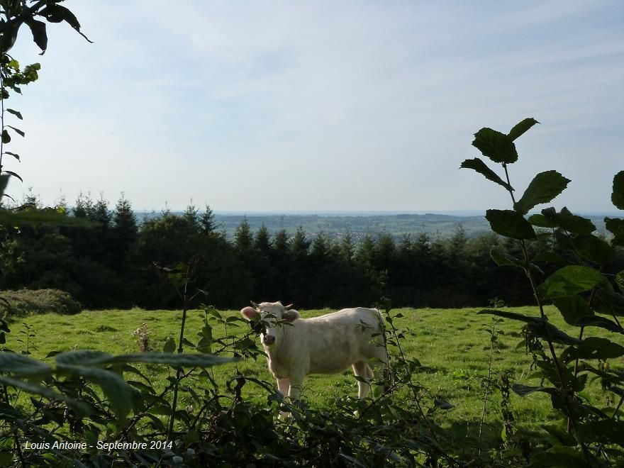 Le Brionnais au téléobjectif : les villages de Curbigny et de Saint Symphorien des Bois. A l'horizon les monts du Morvan.