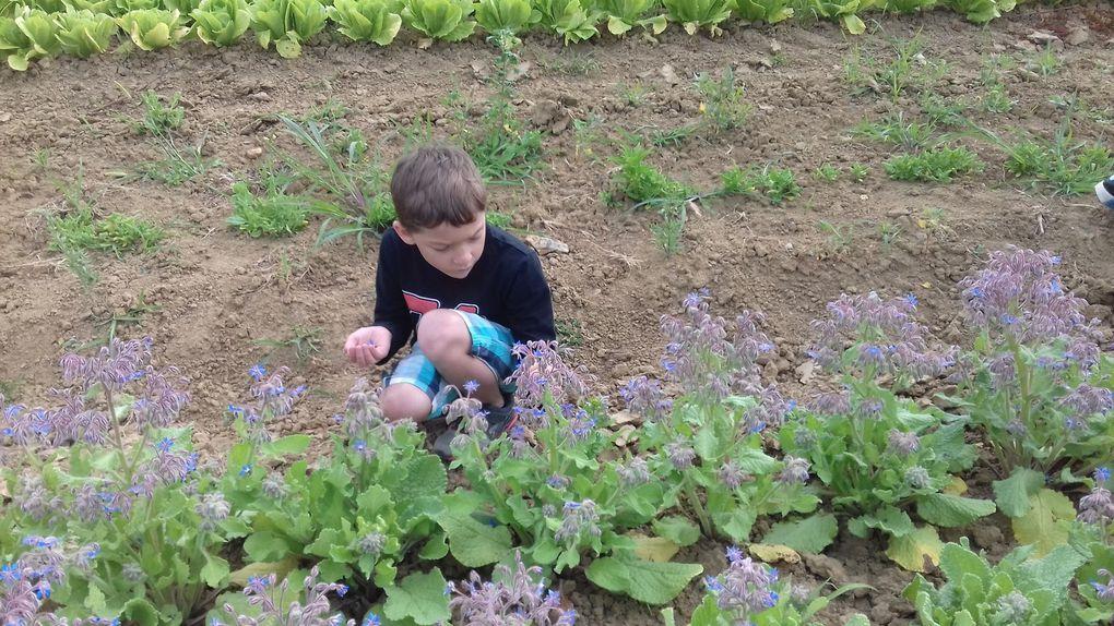 Sortie scolaire des CE1 : des graines  et des découvertes Nature plein les yeux !