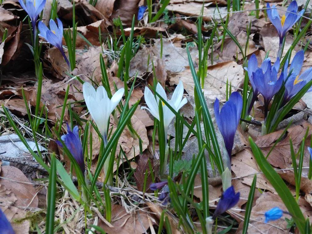 Album - Vercors au printemps