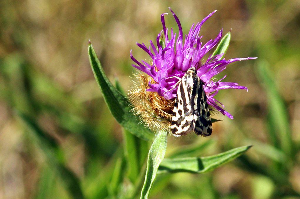 Insectes – Arachnides ( 3 )