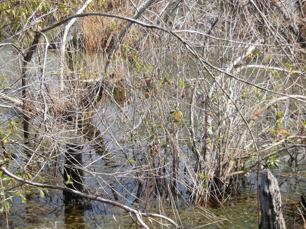La première impression, en pénétrant dans le marais, est cet enchevêtrement de roseaux, d'arbres et l'omni présence de l'eau.