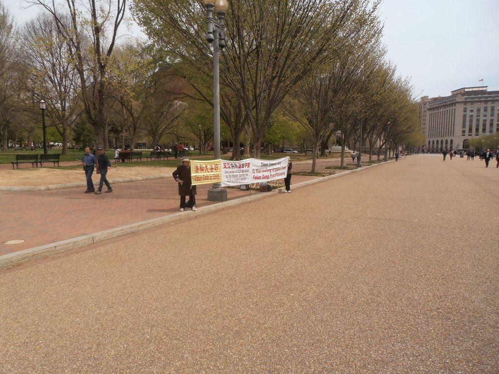 Et devant la Maison Blanche, la tradition de la contestation ne se perd pas. L'actualité s'en fait écho assez souvent. Ce jour-là, c'est un militant antiatomique et des militants demandant l'arrêt du prélèvement d'organes de membres de la secte Fallu Gong en Chine qui la maintenaient ...