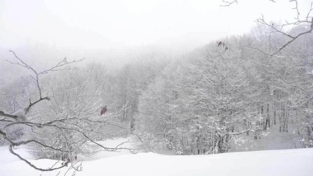 La neige décore les arbres.