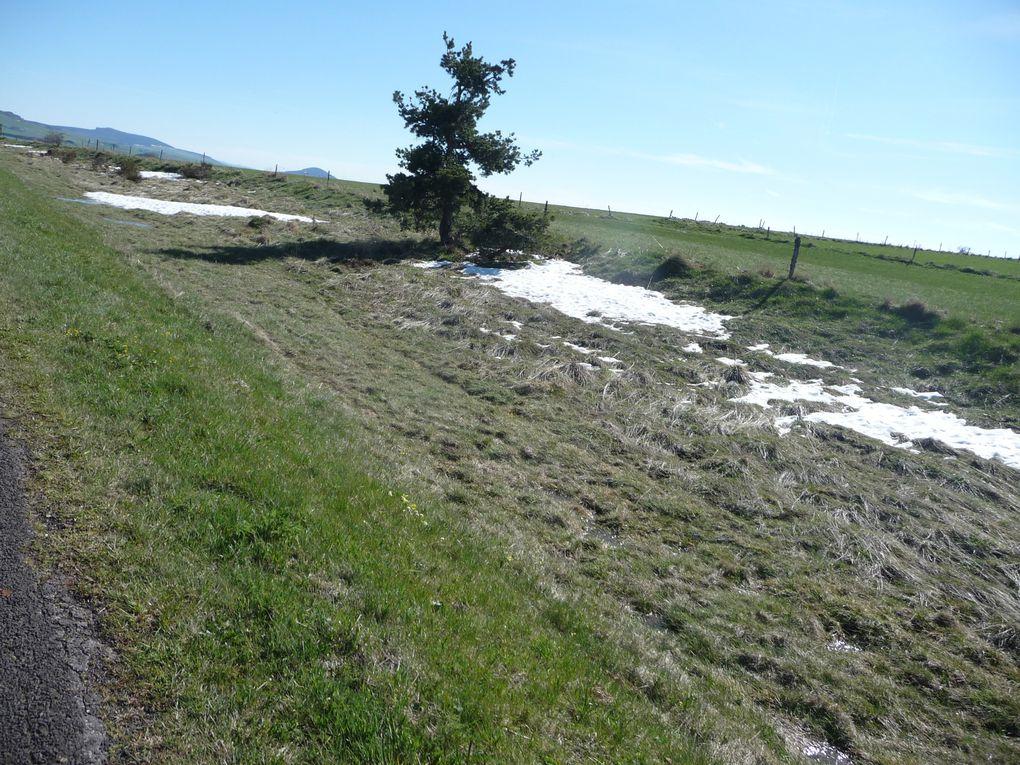 Il reste un peu de neige tombée dimanche dernier.