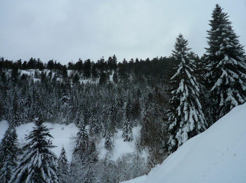 Neige sur les arbres.
