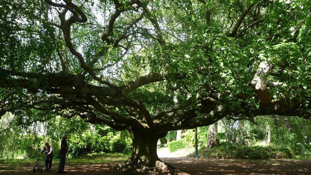 Ses jardins et arbres remarcables,