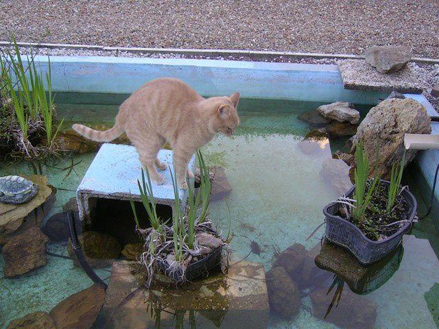 Mon chat Tigrou