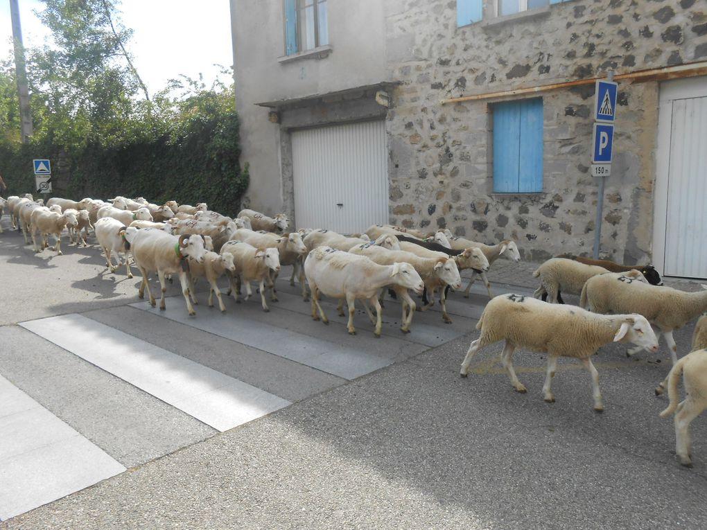 Arrivée des premiers troupeaux à Jaujac, rue Dubois-Maurin