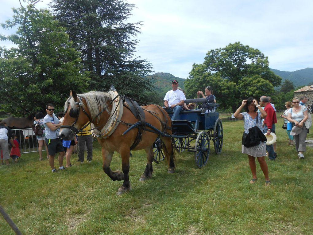 La promenade en charrette, tirée par un cheval de trait, a connu un beau succès