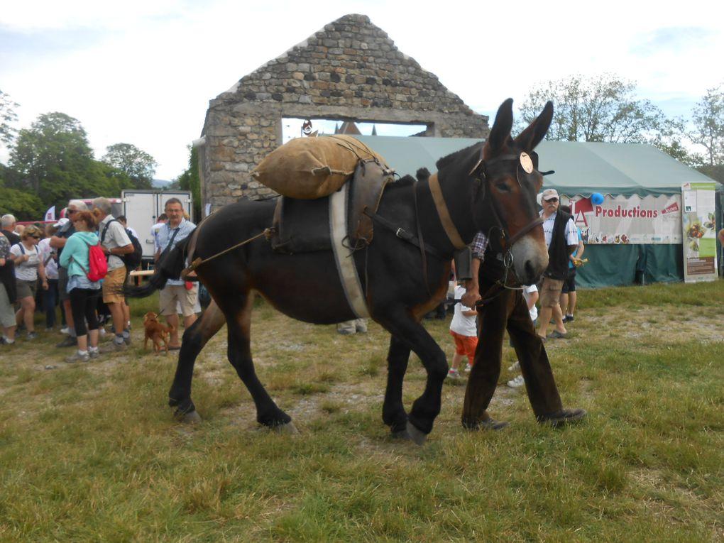 Une élégante mule et son meneur ont paradé tout au long de la journée