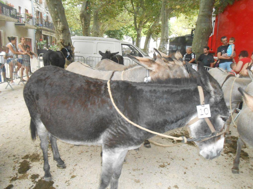 En attendant la course, les ânes sont admirés par les badauds