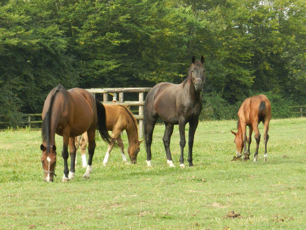 Troupeau de chevaux - copyright : techniques d'élevage