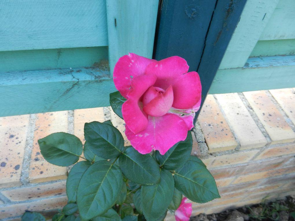 Les Fleurs du Jardin de Juillet