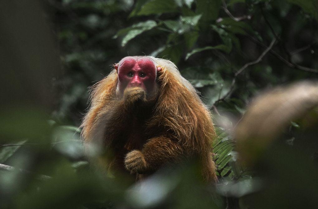 AMAZONIA (BANDE ANNONCE 2013) de Thierry Ragobert