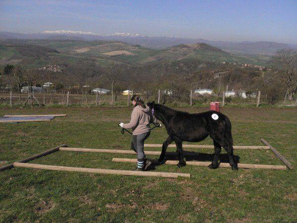 L'ensemble de ces différents tests permet de mettre en avant les qualités du cheval, liées à son caractère et son travail. Soumission, calme, franchise... sont recherchés pour la pratique en extérieur.