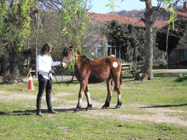 Le dresseur doit s'efforcer de garder son cheval en position statique.