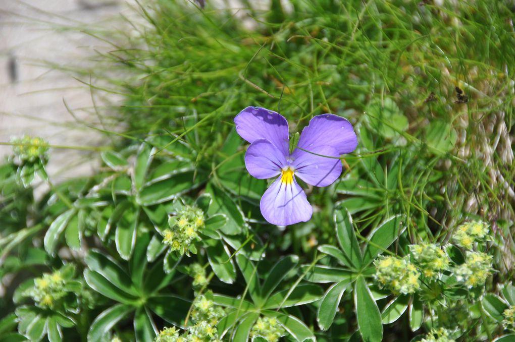 Une multitude de fleurs