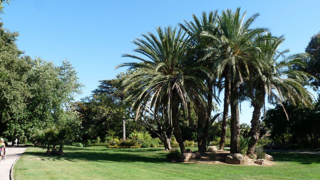 Le jardin comporte une collection de Palmiers, Bambous, plantes succulentes, Magnolias, Yuccas, Buxus, eucalyptus et bien d'autres arbres remarquables. Un vrai bonheur pour les amateurs de plantes exotiques comme tropicales.