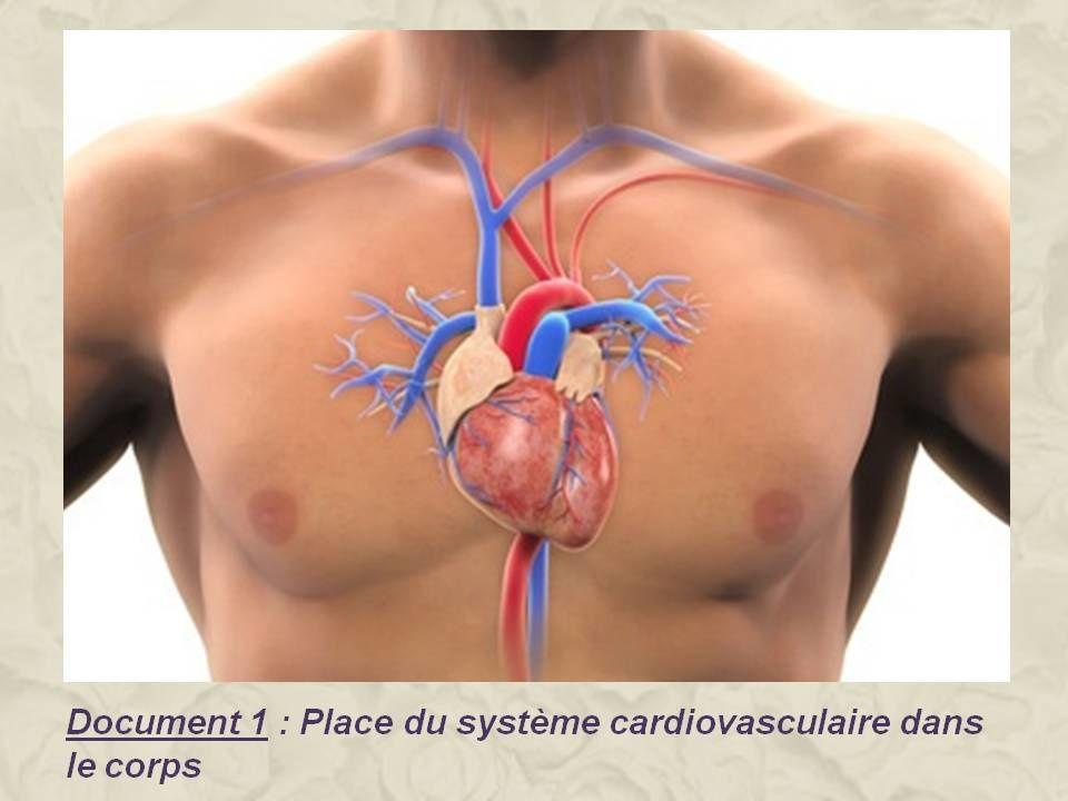 Leçon 4 : Le transport des nutriments, du dioxygène et des déchets aux organes