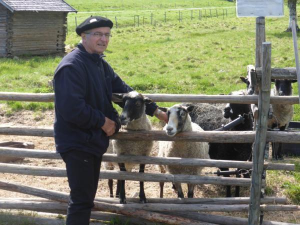 """"""" Venez donc plutôt voir ces petits moutons tout bouclés!""""...""""Coucou , Urana !"""""""