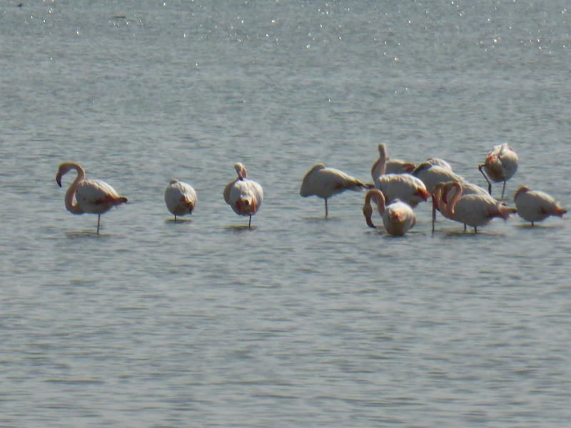 ..nous sommes venus voir les flamants roses...quelques cormorans aussi...