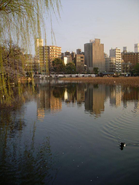 Parc Ueno et quartier Yanaka