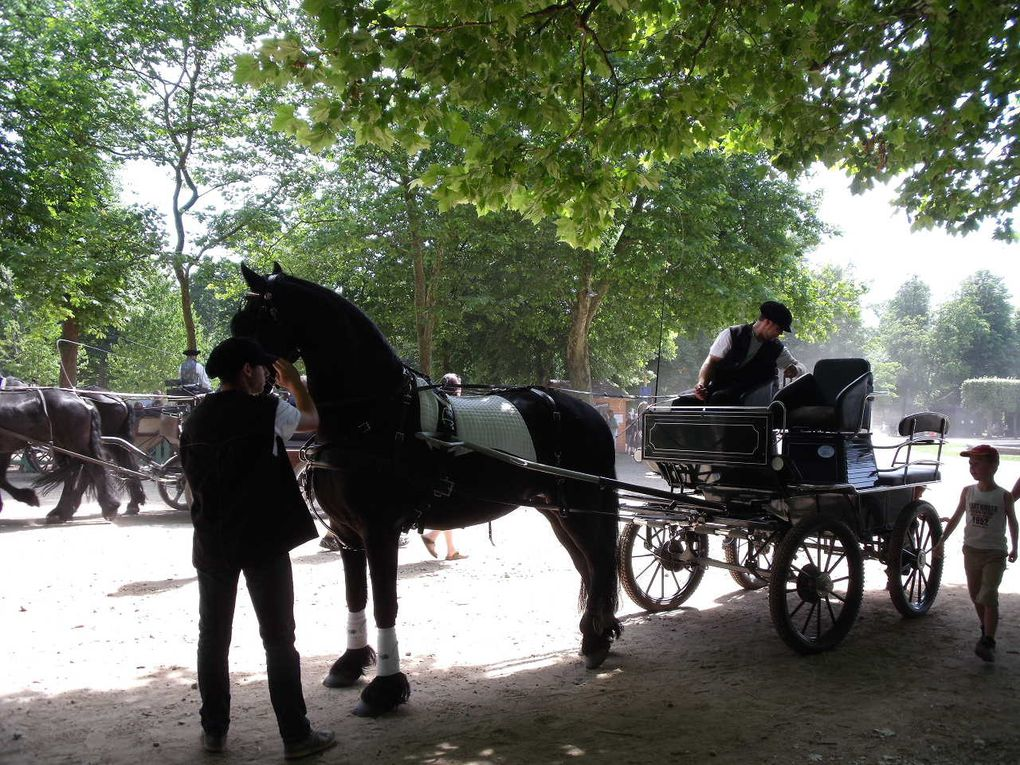 Trips with carriages and shows on the esplanade