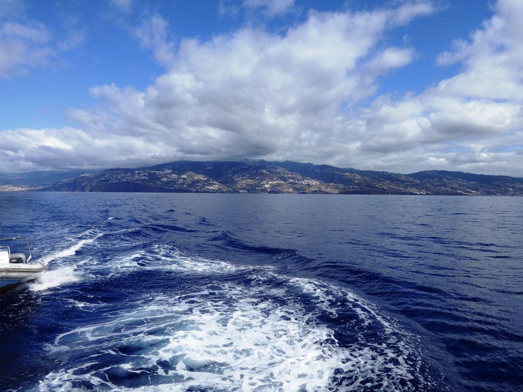 Ile de Madère - 4.a/ Rencontre avec les baleines et les dauphins