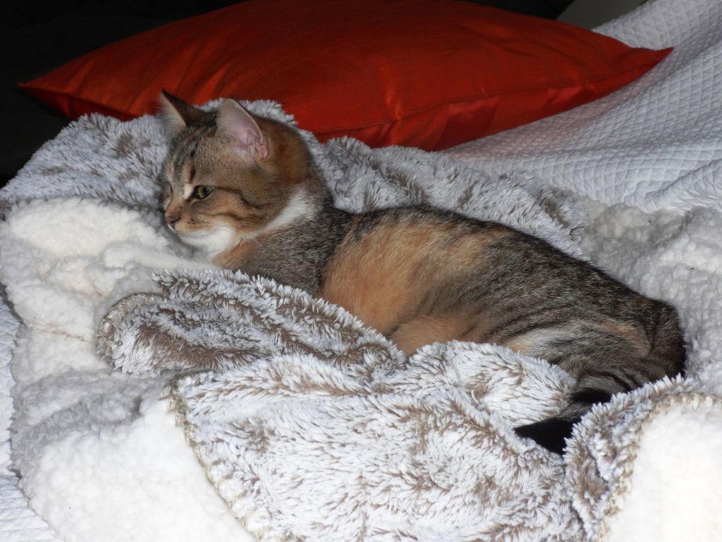 Je joue et je dors, une belle vie de chatte !