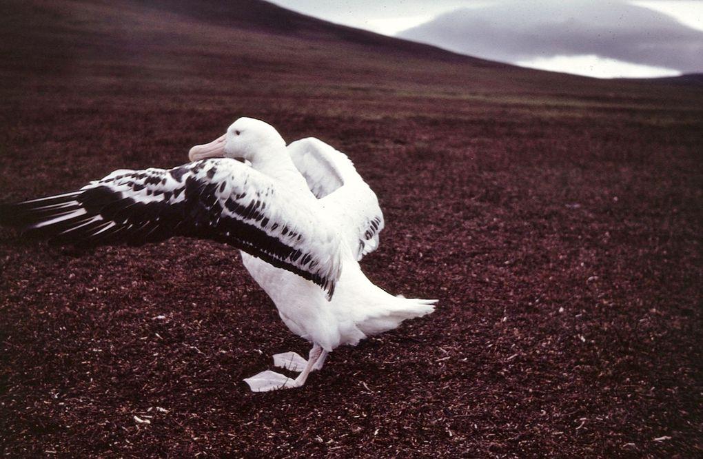 Jeune poussin sur son nid, poussin de 6/7 mois, poussin de 9 mois essayant ses ailes.