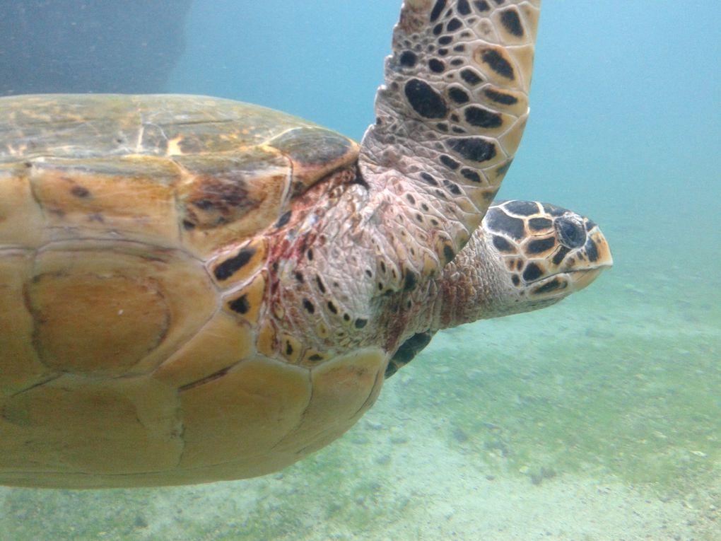 Visite de Kelonia : la paradis des tortues