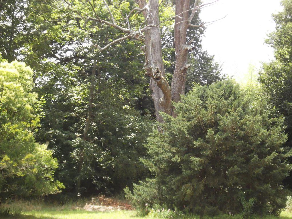 Sous Bois du Bourdieu Juillet 2010