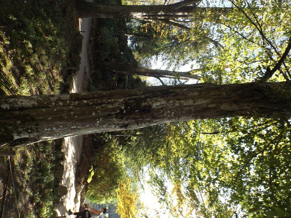 Naturjalles à la découverte des « arbres du Parc de Majolan » C'était le samedi 18 octobre