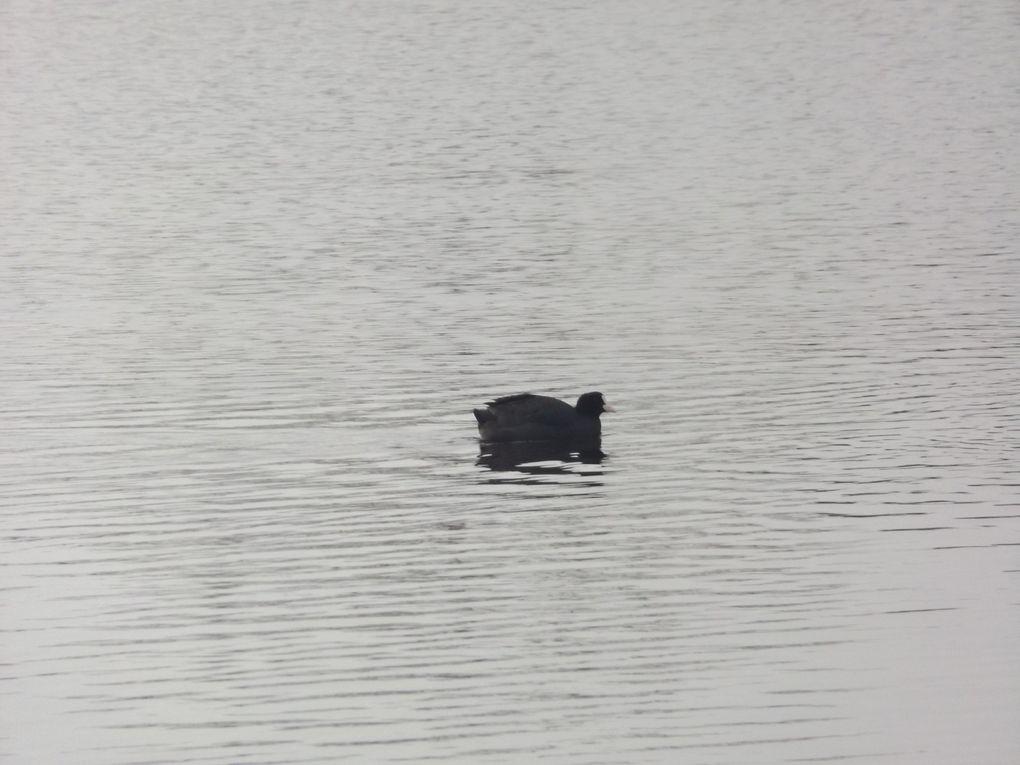 Naturjalles à la rencontre des oiseaux d'eau en hiver à la pointe des Quinconces à Andernos, c'était le 7 février dernier