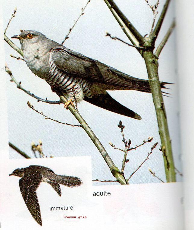 Le 4 avril, Naturjalles en s'initiant aux chants d'oiseaux et à la découverte des plantes de bords de Jalles vécut des moments enchanteurs malgré une matinée fort bruineuse!