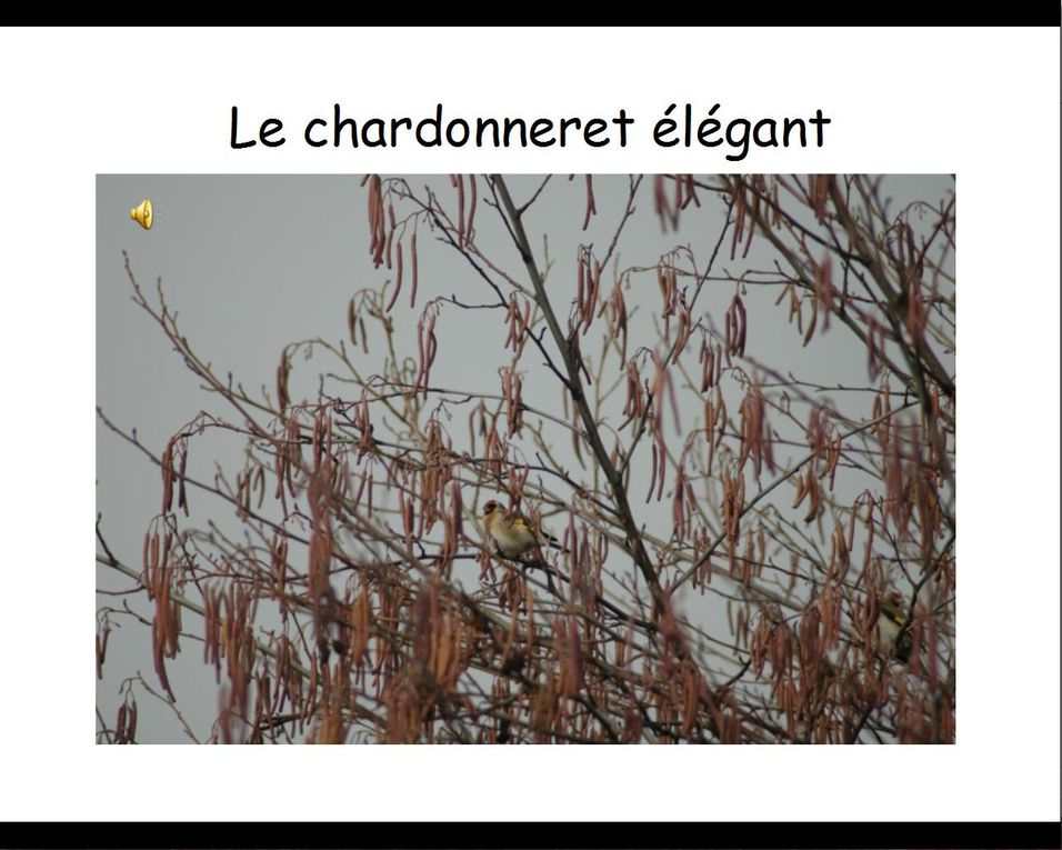 Les Oiseaux du jardin en hiver par Christine